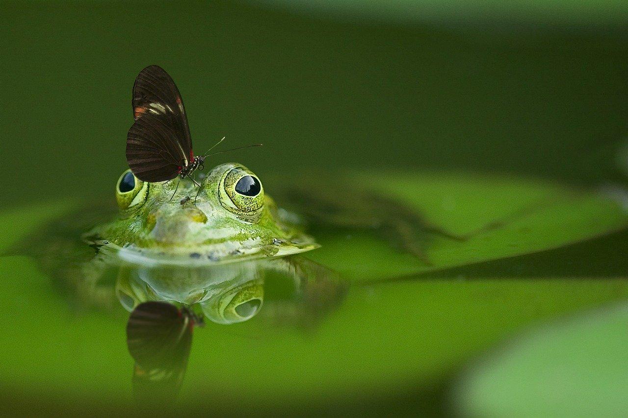田植え後の風物詩 大量のおたまじゃくしとカエルの合唱