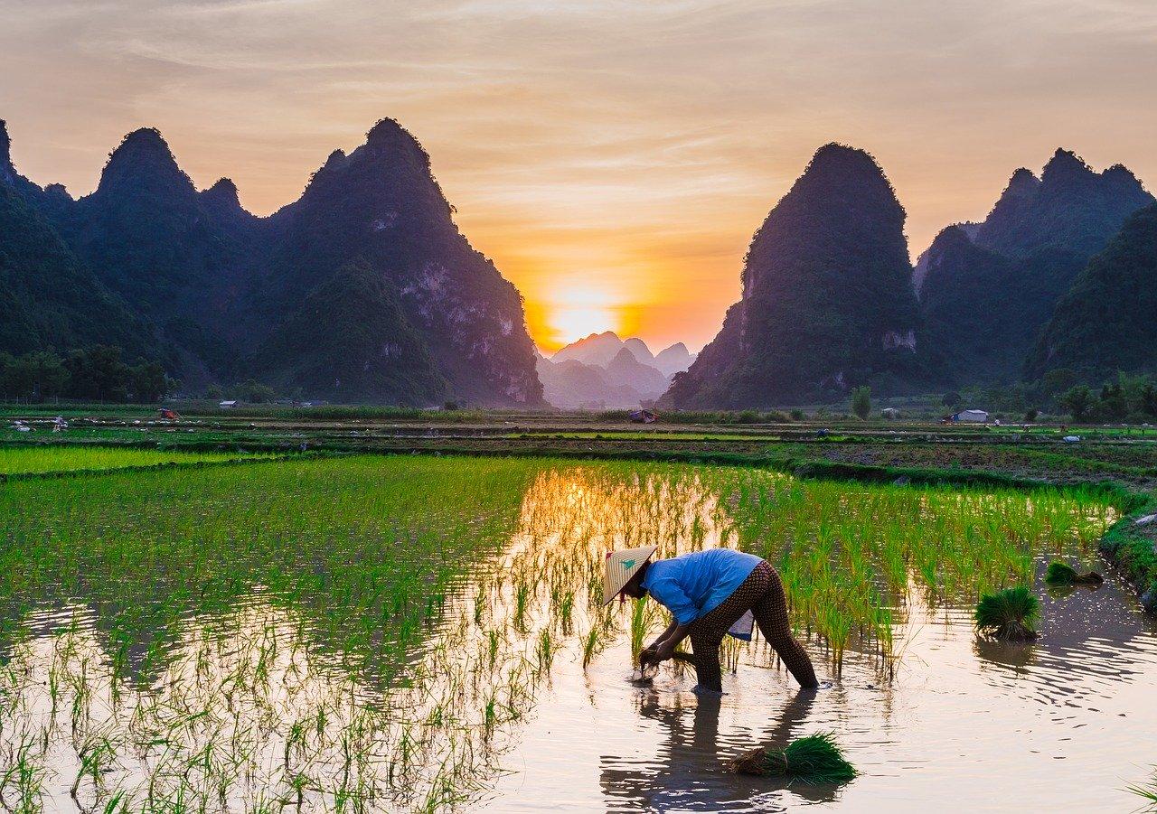 Tuan HoangによるPixabayからの画像